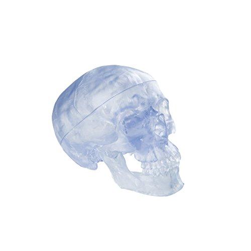 3B Scientific A20/T Plastic 3 Part Transparent Classic Human Skull Model, 7.9