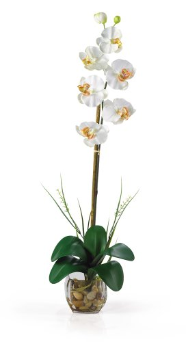 Nearly Natural Phalaenopsis Stem (Nearly Natural 1104-CR Single Phalaenopsis Liquid Illusion Silk Flower Arrangement, Cream)