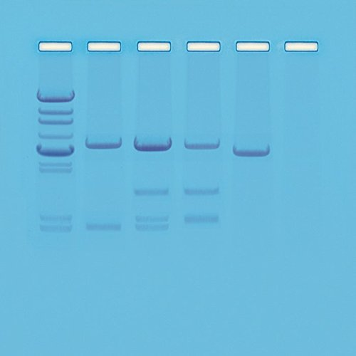 Dna Electrophoresis Gel - Edvotek 114 DNA Paternity Testing Simulation, for 8 Gels