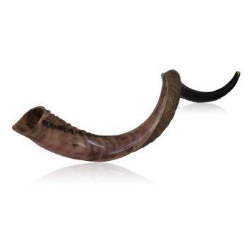 22''-24'' Half Polished Half Natural Kudu Horn Shofar Kosher Israel Tradition