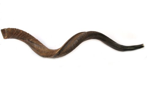 "47""- 48"" Jumbo Yemenite Kudu Horn Natural Shofar by Peer Hastam, with Anti Odor Spray, Made in Israel"