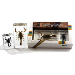 REALBUG Scorpion Collection 2pc Set