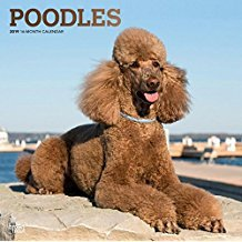 Price comparison product image 2019 POODLE CALENDAR WITH FREE BEATLES MEMOROBILIA (KEY CHAIN,CARD, MAGNET ETCPLANNER, CALENDAR PLANNER,CALENDAR WALL, CALENDAR MONTHLY,DO IT ALL,GALLERY EDITION,MONTHLT PLANNER-