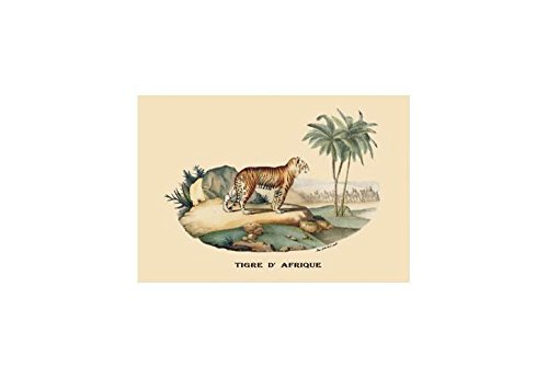 Buyenlarge Tigre D'Afrique (Tiger) Print (Canvas 24x36)