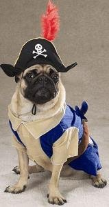 Pirate Pup Halloween Costume Small Dog Costume