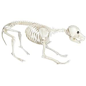 Mean Skeleton Dog Halloween Decoration