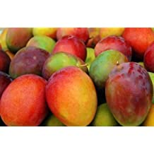 6-fresh Sweet Mango From Jamaica