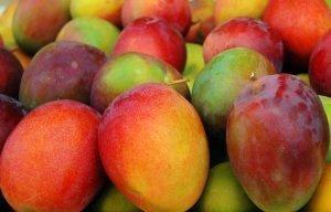 6-fresh Sweet Mango From Jamaica ()