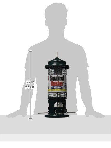 """31RRznmDzxL - Squirrel Buster Standard 5""""x5""""x21.5"""" (w/hanger) Wild Bird Feeder with 4 Metal Perches, 1.3lb Seed Capacity"""