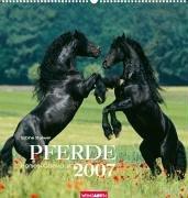 Pferde 2007.