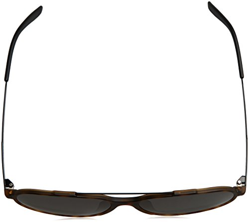 S Negro Havana Brown Carrera 118 Mtblack Sonnenbrille Grey CARRERA wqI7O7Tt