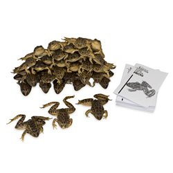 Nasco Frog Classroom Pack Special - 4