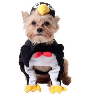 Amazon.com : Penguin Dog Halloween Costume (xx-small) : Pet ...
