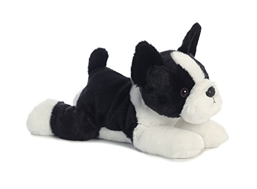 (Buster Boston Terrier Dog 12