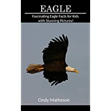 Eagle: Fascinating Eagle Facts for Kids with Stunning Pictures!