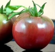 tomato seeds siberia - 9