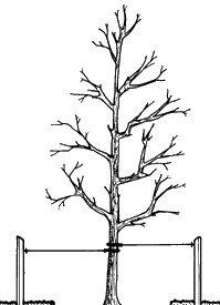 Commercial Grade HORT Tree Straps 6-Pack 16