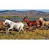 Ron Kimball Wild Horses Huge Wall Mural Art Print Poster