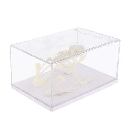 (SM SunniMix Animal Skeleton Specimen Paperweight Collection Toy, Medical Instruments Anatomical Teaching Model -Frog)