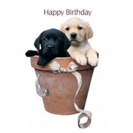 Labrador Puppies Potted Pups Birthday Card Amazoncouk Kitchen