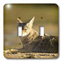 - 3dRose lsp_86792_2 Coyote Wildlife, Scammons Lagoon, Mexico Sa13 Ska0027 Steve Kazlowski Double Toggle Switch