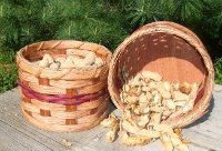 Double Peanut Amish Handmade Basket One Side Holds the Uncracked Peanuts Still in the Shell Other Side Holds Hulls Until Ready to Be Discarded in the Trash or Recycle Bin. Great Idea for Any Man Cave or Bar. Can Also Be Placed on the Coffee Table in Front of the Television. A Healthy Snack for the Family, Kids, or Guests. A Rivet Connects the Two Baskets That Allows Easy Dumping Weaved Basket Colors Will Vary Each Container Measures 6 1/2 X 4 1/4. Total 13 Inches Long ()