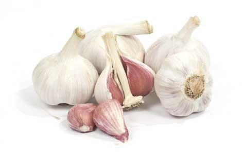Organically Grown Music Garlic Bulbs Large for Planting (1/2 Lb) by Dirt Goddess