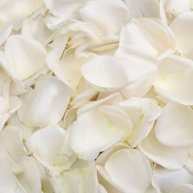 Amazon globalrose 5000 fresh white rose petals real petals globalrose 5000 fresh white rose petals real petals with fast delivery perfect for anniversary mightylinksfo