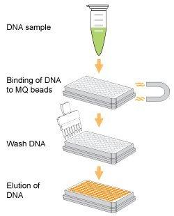 Epigentek - EpiNext DNA Purification HT System - 64 ml