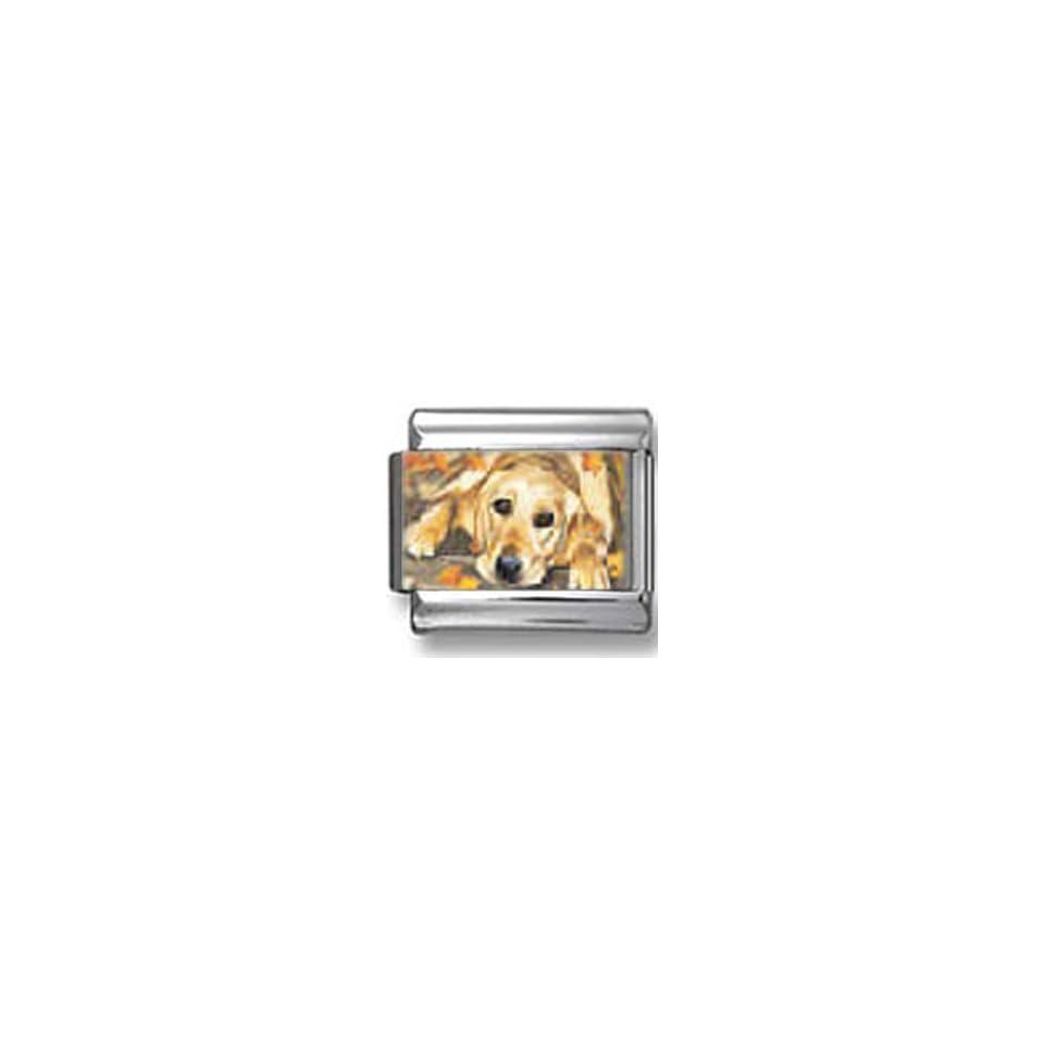 Golden Retriever Dog Photo Italian Charm