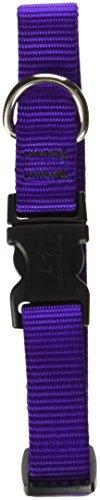 Purple Dog Dog Collar - LupinePet Basics 3/4