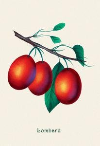 Buy buyenlarge 'lombard plums' painting print