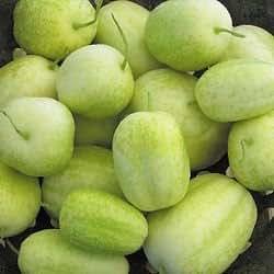 HEIRLOOM NON GMO Crystal Apple Cucumber 15 seeds