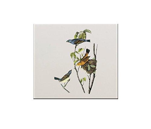 Grosbeak Audubon Bird - 5
