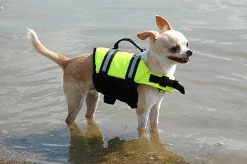 Paws Aboard Doggy Life Jacket Xxs-Safety Neon - Life Doggy Yellow Jacket