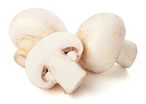 Champignon (Agaricus Bisporus) White Button Common Cultivated Crimini Mushroom Mycelium Dried Seeds Spawn Champignon Mushroom Spores (1 oz) by Don Porcini