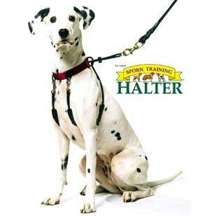 Sporn Training Dog Halter – Large, My Pet Supplies