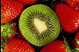 Pack of 1, 5 Lbs. Fragrance Oil Kiwi Strawberry Scent