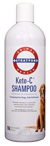 Stratford Pharmaceuticals KETO-C Medicated Shampoo, Chlorhexidine with Ketoconazole (Antibacterial & Antifungal) for Dogs, Cats, and Horses, Cucumber Melon 16 oz