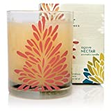 Thymes Agave Nectar Poured Candle *NEW*