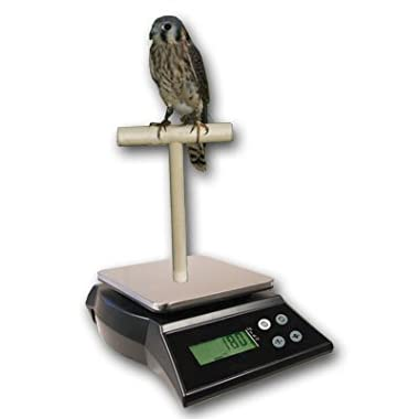 ZIEIS Digital Bird Scale | A42SS-NMTP | Wooden T Perch | Suction Cup | 1.0 Gram or 0.05 Ounce Accuracy | 2000 Gram or 70 Ounce Capacity | Stainless Steel Platform