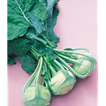 Kohlrabi Early White Viena Great Heirloom Vegetable By Seed Kingdom BULK 15,000 Seeds