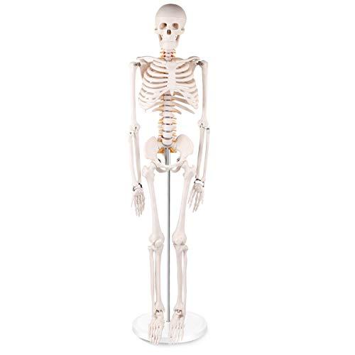 Winyousk Mini Human Skeleton Model with Base, Half Life Size Skeleton Replica 34