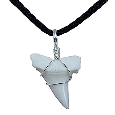 GemShark Real Shark Tooth Necklace White Tip Mako Tiger Shark Sterling Silver Charm Pendant for Boys Girls
