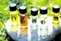 Organic Exotic Cooking Essential Oils Kit - 25% discount ...