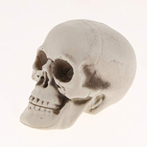B Blesiya Plastic Skull Head Figurine Skeleton Model Statue Halloween Decoration Ornament -, E -