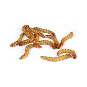 1000ct Live Mealworms, Reptile, Birds, Chickens, Fish Food (Medium)