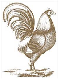 Plaid Anna Griffin Wood Mounted Stamp, Rooster Motif (Griffin Anna Scrapbook)