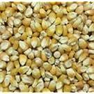 25 kg Futtermais Mais für Pferde Ziegen Hühner und viele andere