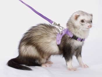 Leads Ferret Marshall - Marshall Pet Walking Jacket Assorted Colors
